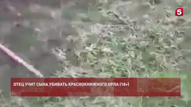 Житель республики вместе с сыном жестоко расправился с птицей