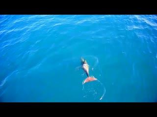 Стая дельфинов напротив Кастрополя