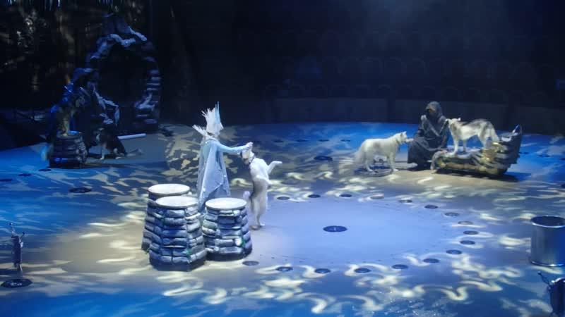 Волкособы Морские лвы полн Цирк на Фонтанке 18 01 2020