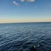 Deniz Ncisi
