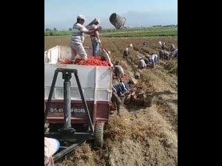 Как быстрая загрузка урожая вручную