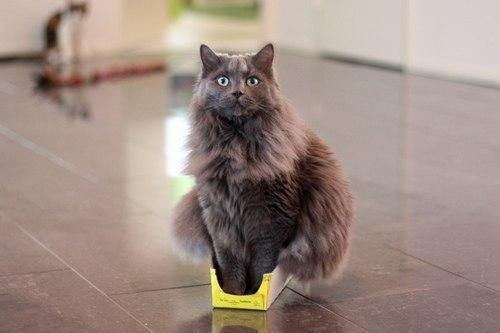 В мире просто не существует такой коробки, в которую не поместился бы кот