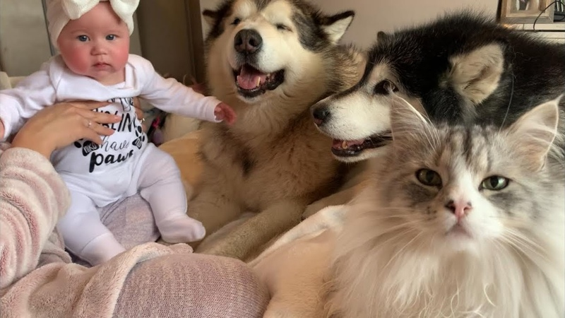 Cutest Baby Waking Up With All These Pets! (Too Much Fluff!!)