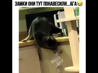 vine video